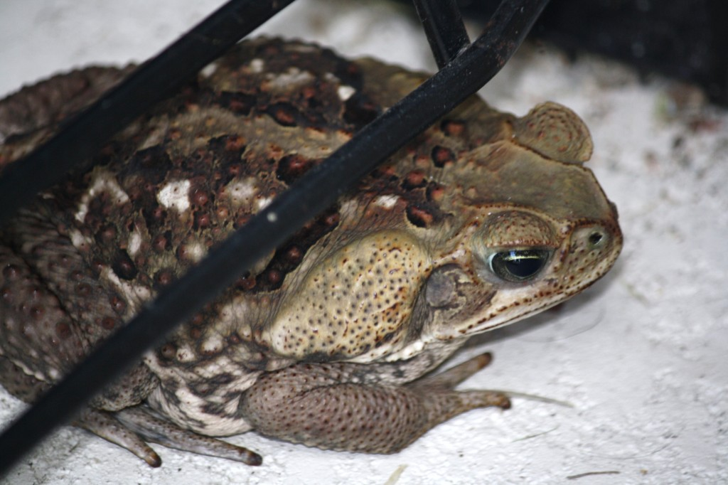 the toad that gave me goosebumps