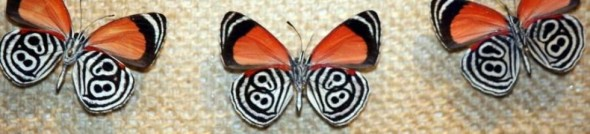 cropped-color-butterflies2.jpg